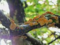 Fungus by puke.jpg