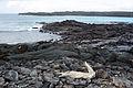 Galápagos Inseln, Ecuador (13894105836).jpg