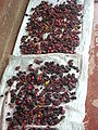 Garcinia indica rinds being dried.jpg