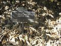 Gardenology.org-IMG 0781 hunt07mar.jpg