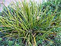 Gardenology.org-IMG 2598 ucla09.jpg