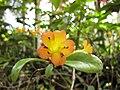 Gardenology.org-IMG 7511 hunt09jun.jpg