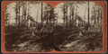 Gateway at the Genesee Camp Ground, Silver Lake, from Robert N. Dennis collection of stereoscopic views.png