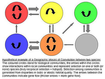 Geographic MOSAIC MODEL of Coevolution.jpg