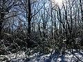 Georgia snow IMG 4865 (38061051795).jpg