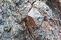 Gesteine am Ufer der Urft im Nationalpark Eifel-3531.jpg