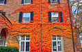 Gfp-wisconsin-madison-vines-growing-on-walls.jpg