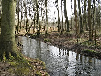 Marselisborg Forests - Part of Marselisborg Forests, showing the Giber stream running through Moesgård forest.