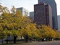 Ginkgo biloba in autumn near Tokyo Station 秋の行幸通りのイチョウ並木 - panoramio.jpg