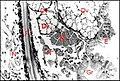 Glande venin Diguetia 2.jpg