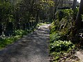 Glen Maye, evening sunlight - geograph.org.uk - 779180.jpg