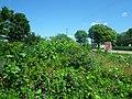 Gloria's Garden - panoramio (1).jpg
