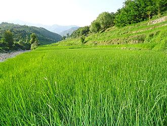Lower Dir District - Image: Goor 01