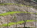 Grass Layers - Spring in Jerusalem (5561189852).jpg