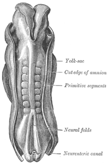 Somite division of the body of an animal or embryo