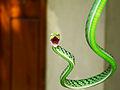 Greeno, a pet snake.jpg