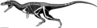 Gualicho - Skeletal reconstruction, with known elements in white