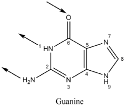 Guanine Can Be Hydrolyzed With Strong Acid To Glycine Ammonia Carbon Dioxide And Monoxide First Gets Deaminated Become Xanthine