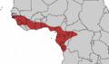 Guinea Turaco.png
