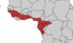Guinea turaco - Image: Guinea Turaco