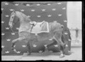 Gustav IIIs häst Kaulbars - Livrustkammaren - 43405.tif