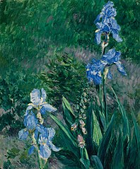 Iris bleus, jardin du Petit Gennevilliers