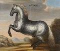Hästporträtt från cirka 1650, på apelkastad häst - Skoklosters slott - 95249.tif