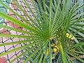 HK 上環 Sheung Wan 卜公花園 Blake Garden plants green 掌狀葉 palm leaves February 2020 SS2 04.jpg