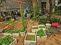 HK 油麻地 Yau Ma Tei 九龍華仁書院 Kowloon Wah Yan College back yard gardening Jan-2014 002.JPG