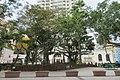 HK 觀塘 Kwun Tong 月華街 Yuet Wah Street Playground December 2018 IX2 12 trees.jpg