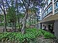 HK Hung Hom South Road Rest Garden 紅磡南道休憩花園 trees Mar-2013.JPG
