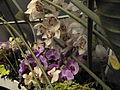 Haifa International Flower Exhibition P1140005.JPG