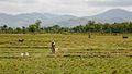 Haiti (7810860726).jpg