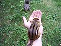 Hand-of-chipfriendship (and squirrel).jpg