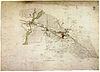 100px handzeichnung berlin 1733