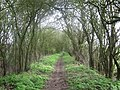 Harcamlow Way near Horseheath - geograph.org.uk - 306854.jpg