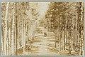 Harjutie, Runebergin kumpu, Nervanderin kumpu, A. Sihvonen unsure 1907 PK0455.jpg