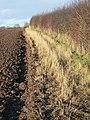 Hedge and headland - geograph.org.uk - 1127338.jpg