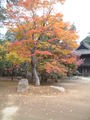 Heirinji autumn colours.jpg