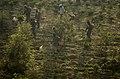 Herbicide spraying in tea plantation JEG9444.jpg