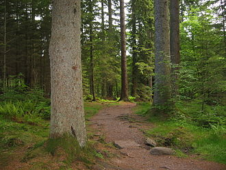 The Hermitage, Dunkeld - A stretch of the riverside path