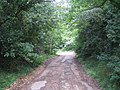 Hertingfordbury, Old Thieves Lane - geograph.org.uk - 480756.jpg