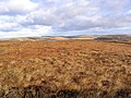 High moorland in the Cheviot Hills - geograph.org.uk - 616104.jpg