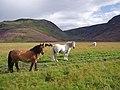 Highland Ponies in Glen Feshie - geograph.org.uk - 917033.jpg