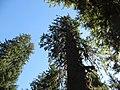 Hoh Rainforest - Olympic National Park - Washington State (9779944142).jpg