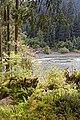 Hoh River Trail 2017 14.jpg