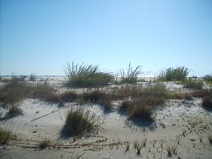 Horn Island (Mississippi) - South Side of Horn Island