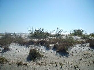 Horn Island (Mississippi) - South Side of Horn Island