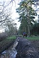 Horse riders, Thetford Forest - geograph.org.uk - 302551.jpg