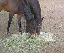 Animal feed - Wikipedia